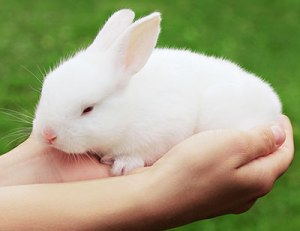 animal-reiki-rabbit400